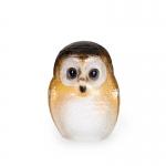 Safari Owlet